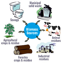 Biomass Sources