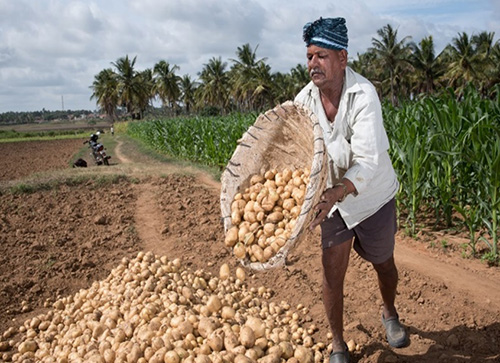 Better yields for small-scale potato farmers